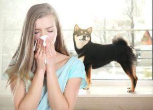 Luftreiniger bei Hundeallergie