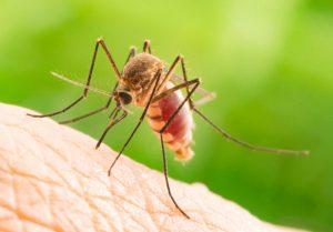 Mücke auf der Haut